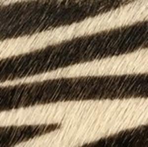 Zebra Hair Calf Belt with Brushed Nickel Buckle