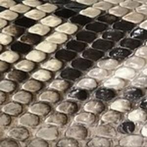 Glazed Natural Python Belt with Brushed Nickel Buckle