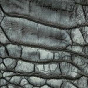 Black Washed Ostrich Leg Belt with Brushed Nickel Buckle